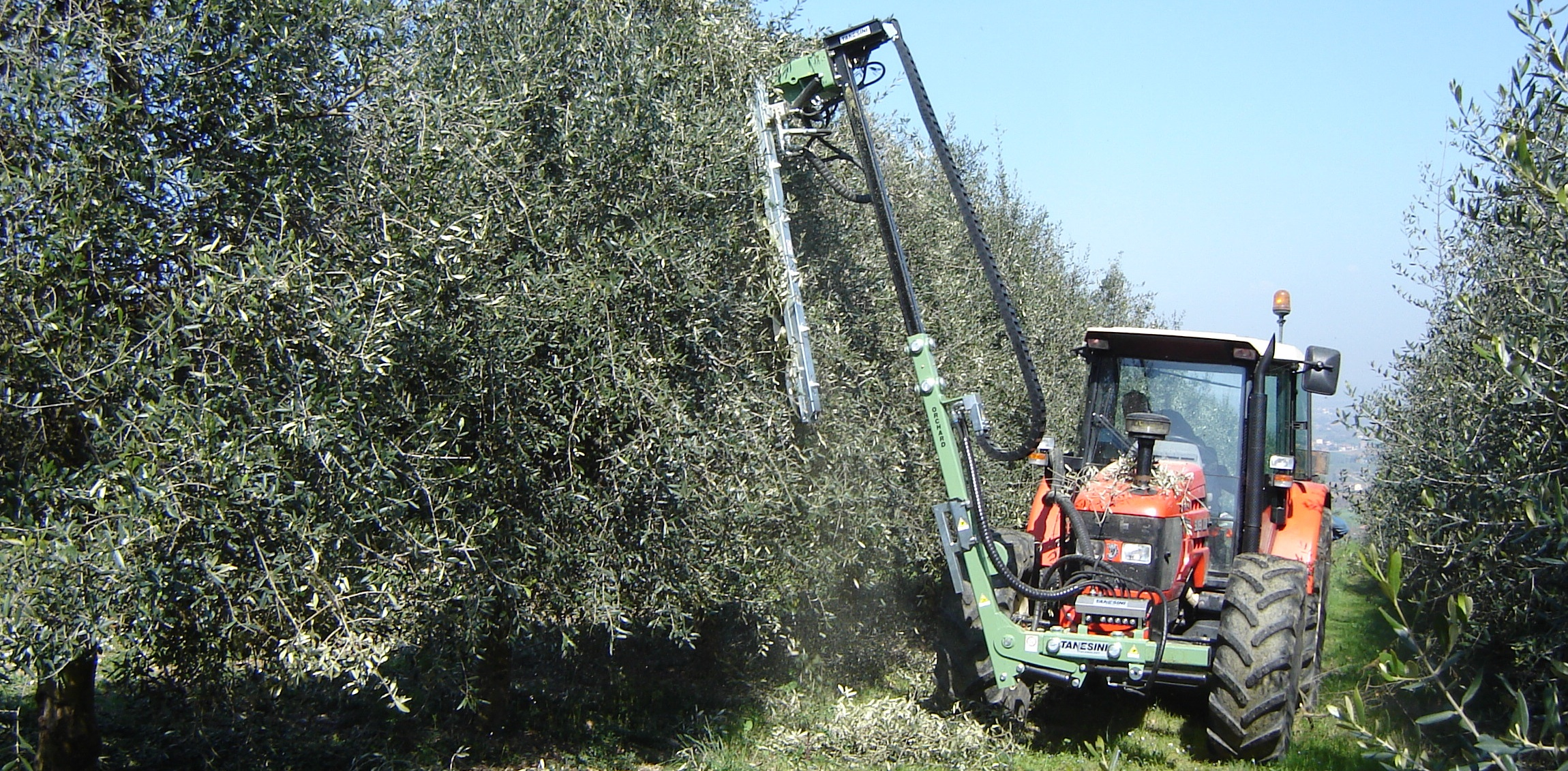 mechanical olive trees pruning