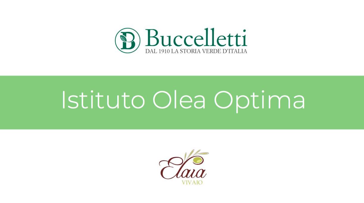 Istituto Olea Optima – L'iniziativa